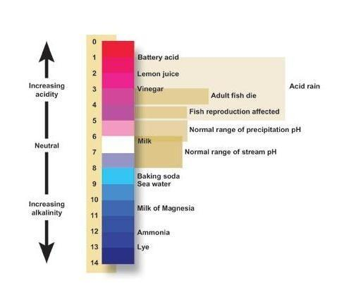 pH scale of water